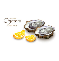 oysters and lemon realistic detailed 3d vector image