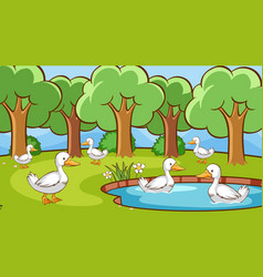 scene with many ducks in pond vector image