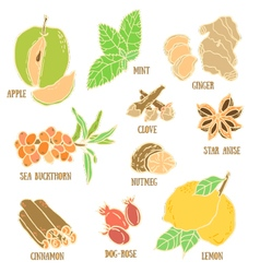 Set with spices berries and fruits vector image