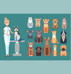 Veterinarian doctor checking up pet dog on table vector