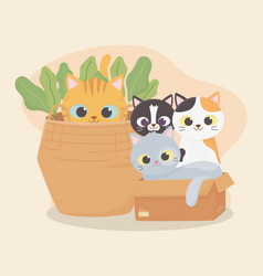 cats make me happy cats in cardboard box and vector image