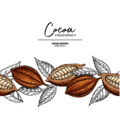 cocoa border superfood drawing template vector image