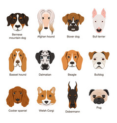 different dogs set isolate vector image