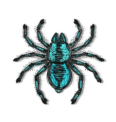 Spider tarantula color drawing vector