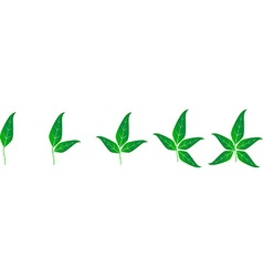 Template with set of green leaves vector