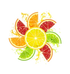 Citrus Fruits in the Form of a Flower vector image vector image