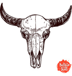 Buffalo Skull Hand Drawn Scetch vector image vector image