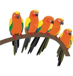 bright sun conure parrots on white vector image vector image