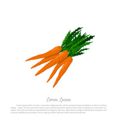 Bunch orange carrots on a white background vector