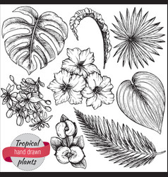collection hand drawn tropical flowers vector image