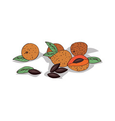 Isolated clipart sapote vector