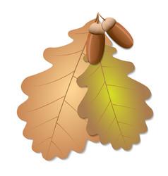 oak leaves with acorns vector image