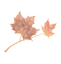 orange maple leaves isolated on white background vector image