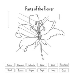 Parts of the flower worksheet in black and white vector