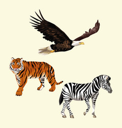 Wild animals colorful drawing vector