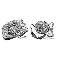 Fragment fossils skeleton prehistoric dead vector