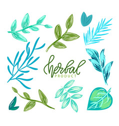 Herbal product foliage leaves plants vector