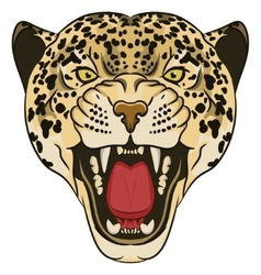 Leopard Portrait Angry wild big cat vector
