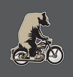 bear riding a motorcycle on a gray background vector image