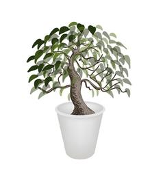 Bonsai Tree in A Flower Pot vector