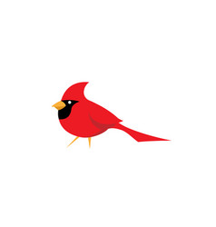Red cardinal bird logo vector