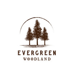 rustic retro vintage woodland evergreen pines vector image