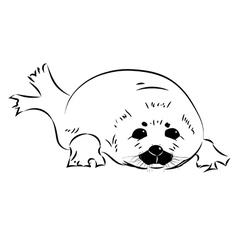 Seal baby vector