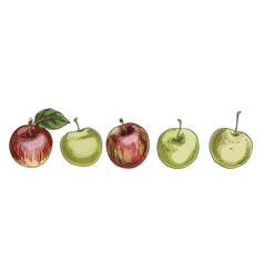 set of red and green apples isolated on white vector image