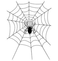 spidr web 03 vector image vector image