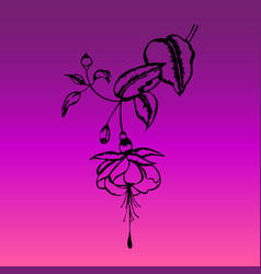 engraved fuchsia flower black silhouette vector image