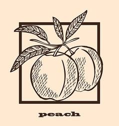 Hand drawn peaches vector