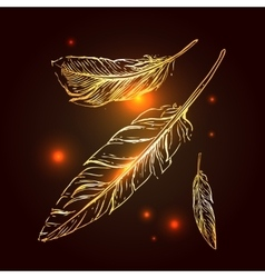 hand drrawn feathers vector image