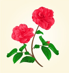 Camellia Japonica flowers with bud vintage vector