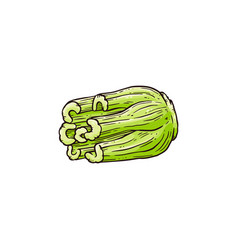 Celery plants green stalks in vector