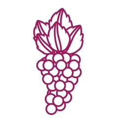 Contour purple line with bunch grapes vector