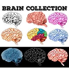 Different design of human brain vector