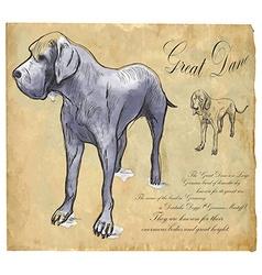 Great dane german mastiff - an hand drawn vector