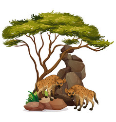 Isolated picture hyena on rock vector