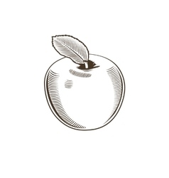 Apple in vintage style Line art vector image vector image