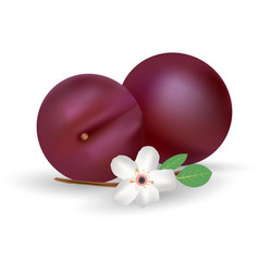 plums icon fresh and juicy fruit isolated vector image vector image