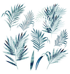 big collection palm leaves in watercolor style vector image