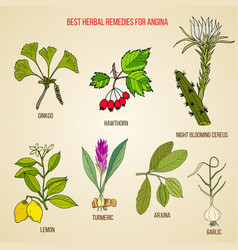 Collection of best herbs for angina treatment vector