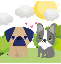 Dogs pug and boston terrier sitting in grass vector
