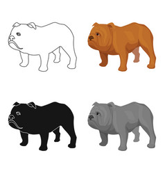 English bulldog icon in cartoon style isolated on vector