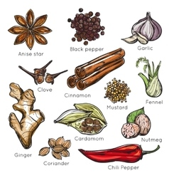 Indian Spices Herbs Icon Set vector
