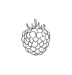 blackberry hand drawn sketch icon vector image