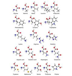 Chemical formulas of twenty basic amino acids vector image vector image