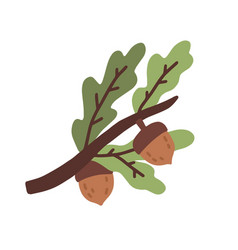 colorful oak tree branch with leaves and acorns or vector image