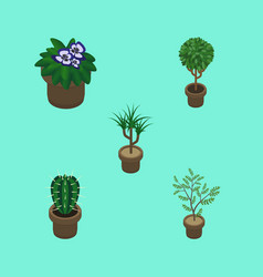 Isometric plant set of peyote fern flowerpot and vector