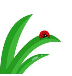ladybug ladybird insect fresh green grass stalk vector image
